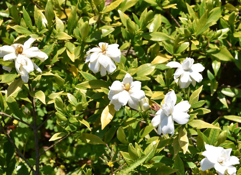 f:id:flowerTDR:20210616234424j:plain