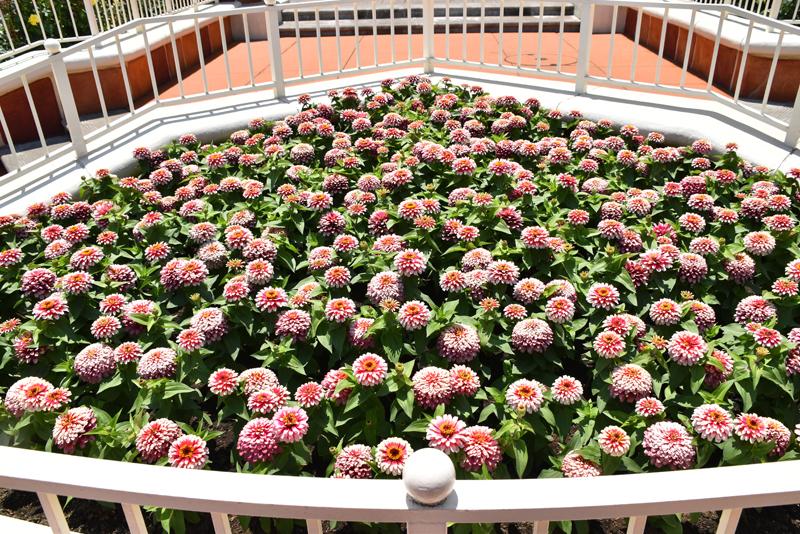 f:id:flowerTDR:20210618103346j:plain