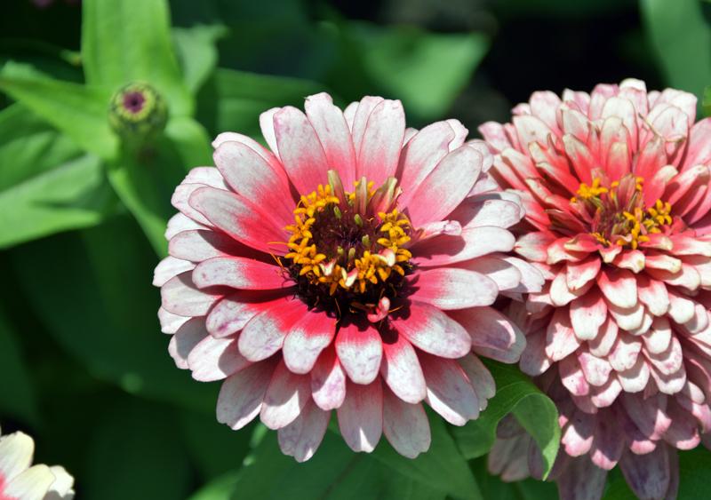 f:id:flowerTDR:20210618103400j:plain