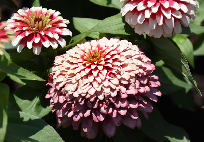 f:id:flowerTDR:20210618103411j:plain