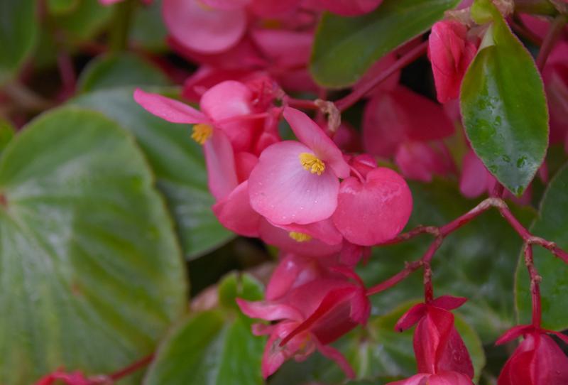 f:id:flowerTDR:20210618171852j:plain