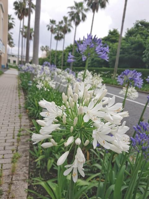 f:id:flowerTDR:20210621091940j:image