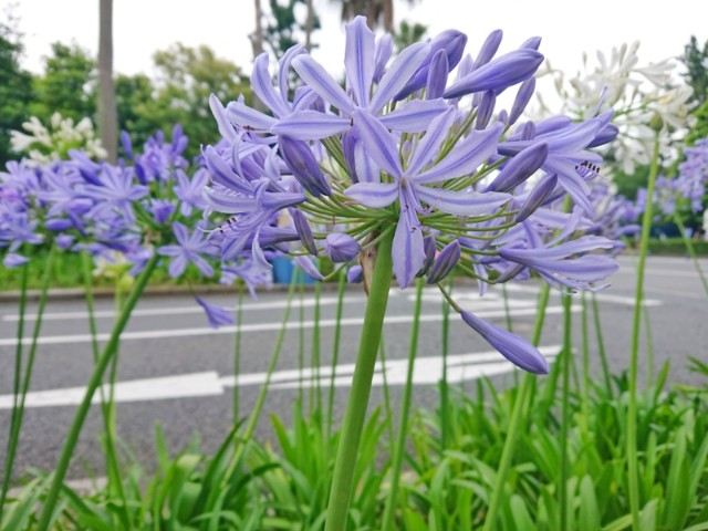 f:id:flowerTDR:20210621091950j:image