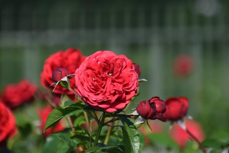 f:id:flowerTDR:20210624084730j:plain