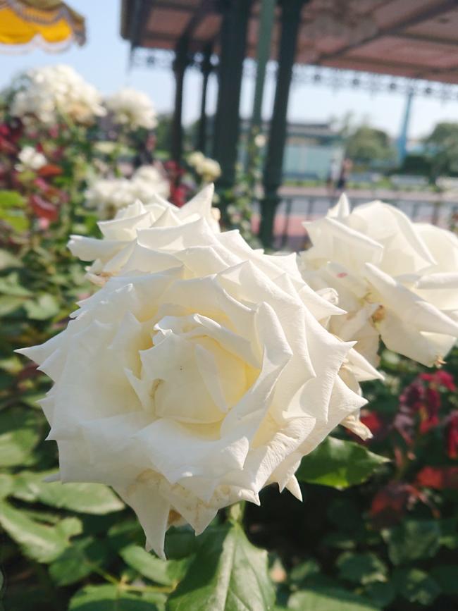 f:id:flowerTDR:20210624085018j:plain