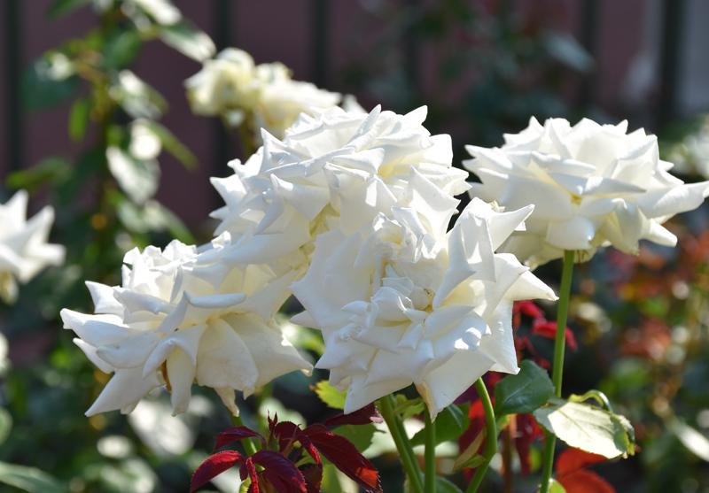f:id:flowerTDR:20210624085029j:plain