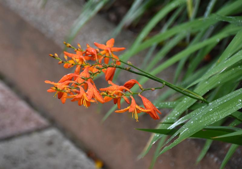 f:id:flowerTDR:20210701101505j:plain