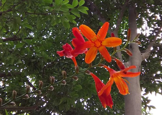 f:id:flowerTDR:20210701102540j:plain