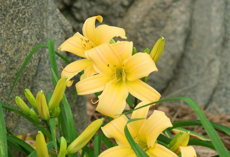 f:id:flowerTDR:20210705083400j:plain