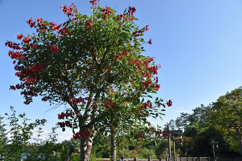 f:id:flowerTDR:20210706081759j:plain