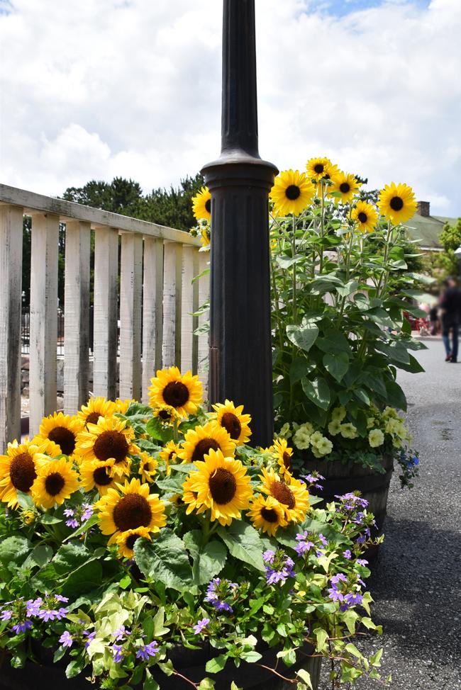 f:id:flowerTDR:20210710114340j:plain