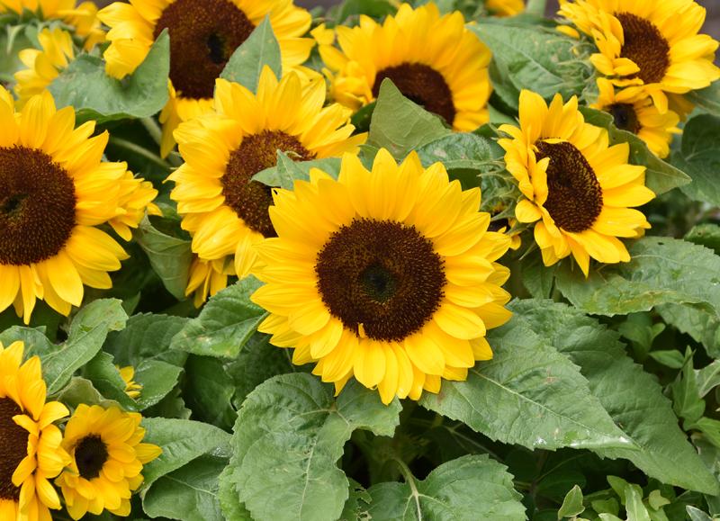 f:id:flowerTDR:20210710114354j:plain