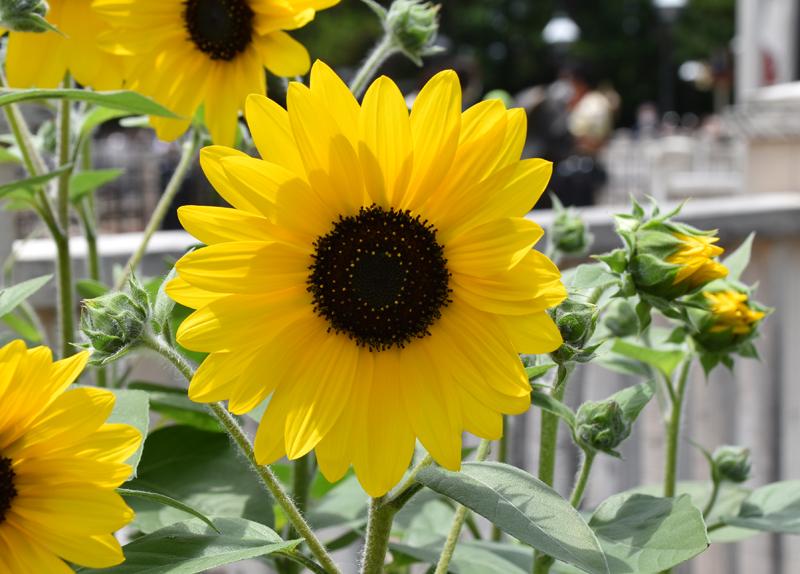 f:id:flowerTDR:20210710114411j:plain