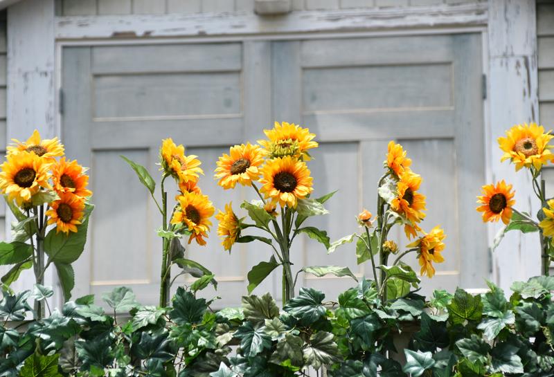 f:id:flowerTDR:20210710114439j:plain