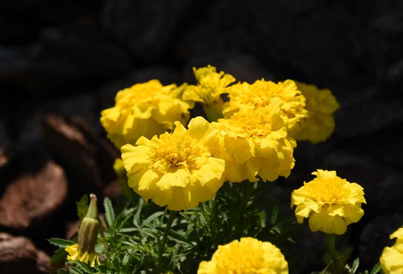 f:id:flowerTDR:20210713082857j:plain
