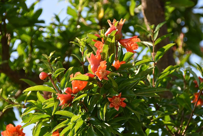 f:id:flowerTDR:20210714080415j:plain