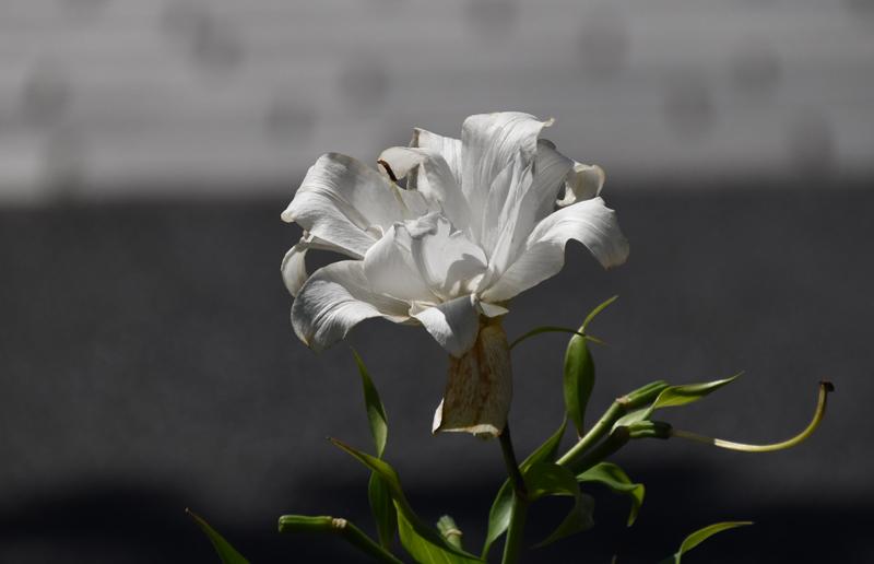 f:id:flowerTDR:20210717084328j:plain