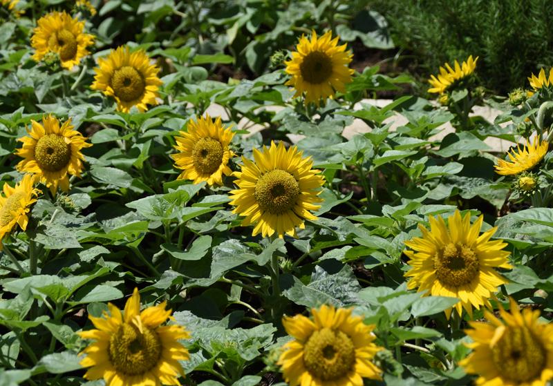 f:id:flowerTDR:20210719080459j:plain