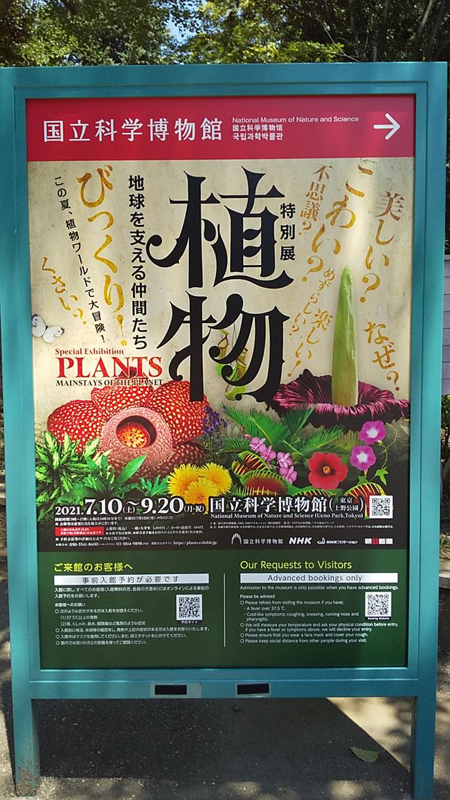 f:id:flowerTDR:20210725094519j:plain