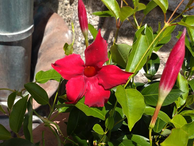 f:id:flowerTDR:20210726081115j:plain