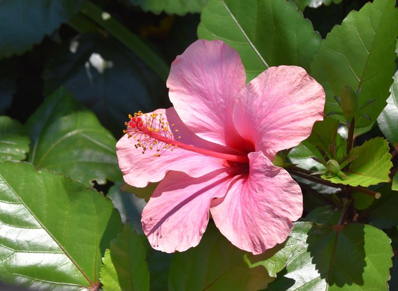f:id:flowerTDR:20210805092049j:plain