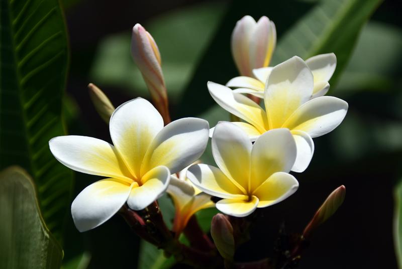 f:id:flowerTDR:20210805092808j:plain