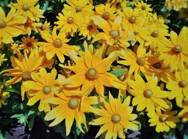 f:id:flowerTDR:20210806093136j:image