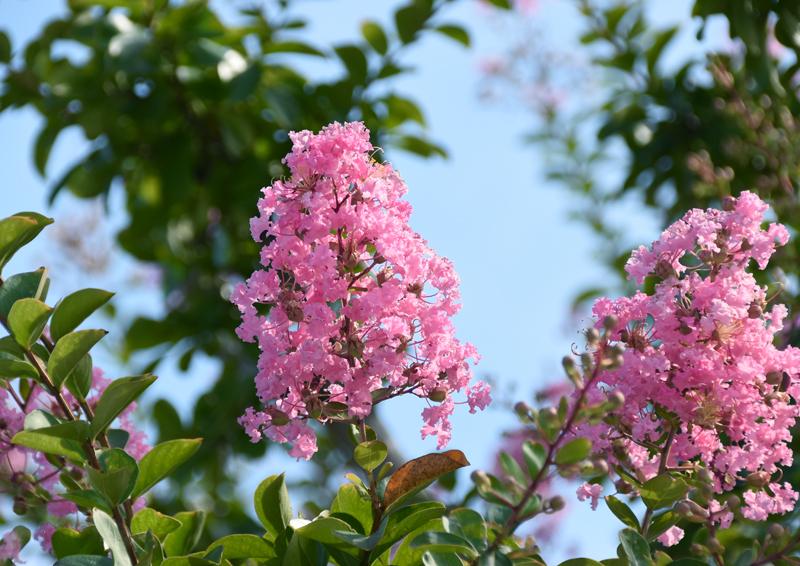 f:id:flowerTDR:20210808233105j:plain