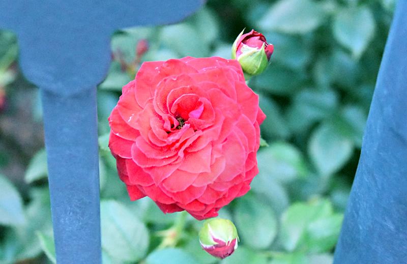 f:id:flowerTDR:20210813225032j:plain