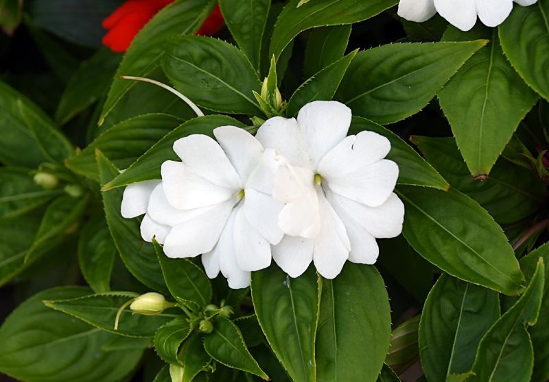 f:id:flowerTDR:20210818115910j:plain