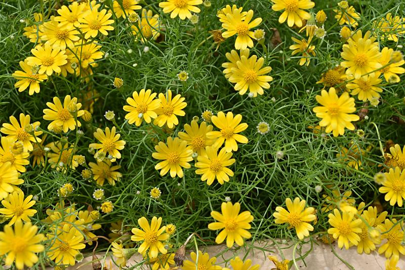 f:id:flowerTDR:20210826092216j:plain