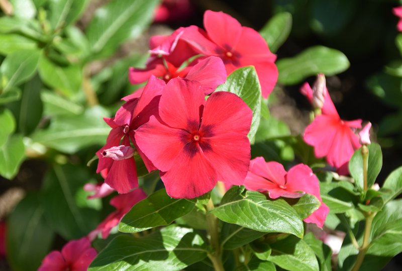 f:id:flowerTDR:20210828093959j:plain