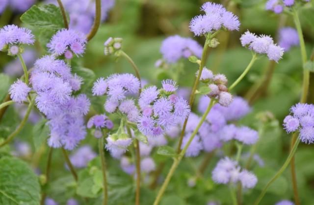 f:id:flowerTDR:20210901095038j:image