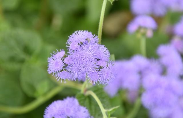 f:id:flowerTDR:20210901095053j:image