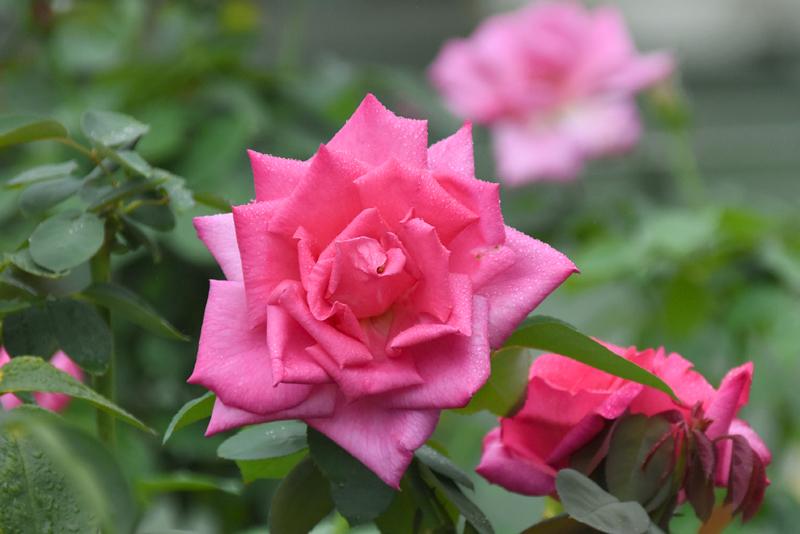 f:id:flowerTDR:20210902091617j:plain