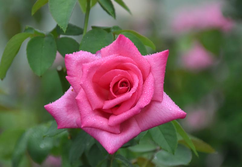 f:id:flowerTDR:20210902092957j:plain