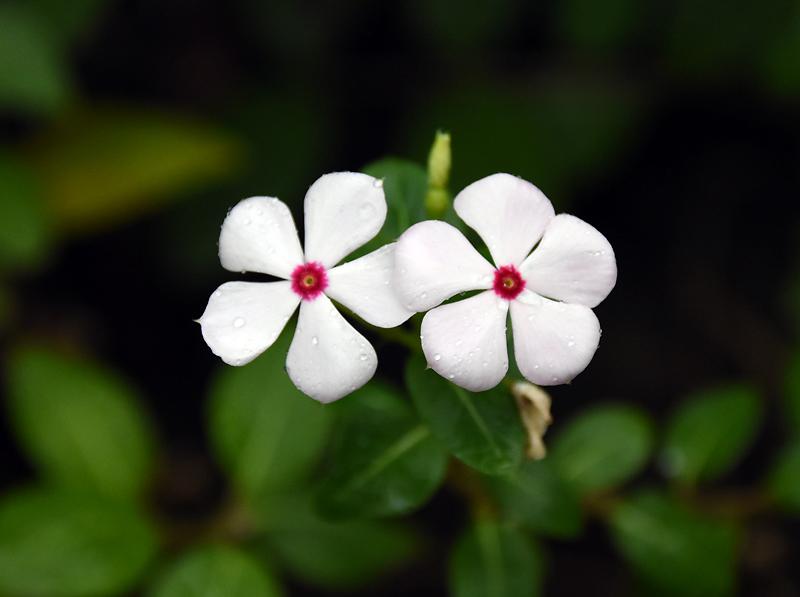 f:id:flowerTDR:20210904075335j:plain