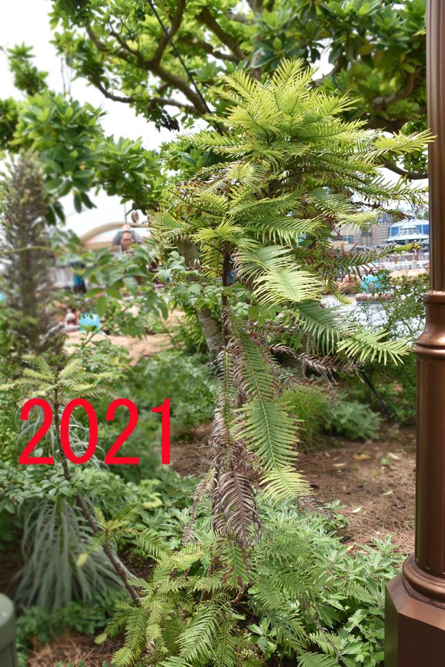 f:id:flowerTDR:20210904082906j:plain