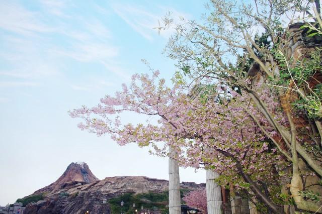 f:id:flowerTDR:20210904084432j:image