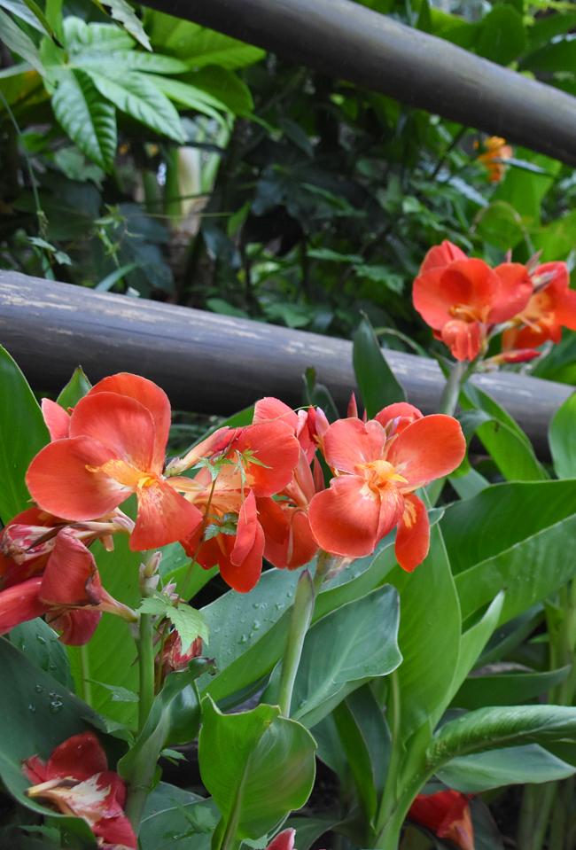 f:id:flowerTDR:20210905073509j:plain