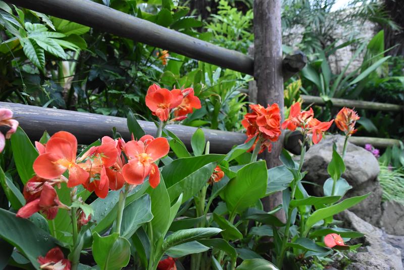 f:id:flowerTDR:20210905073829j:plain