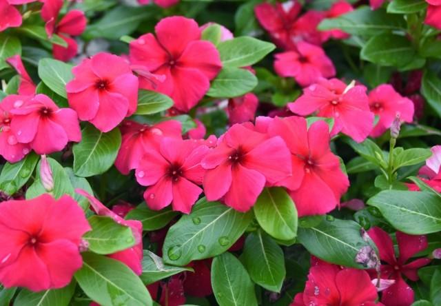 f:id:flowerTDR:20210907091739j:image