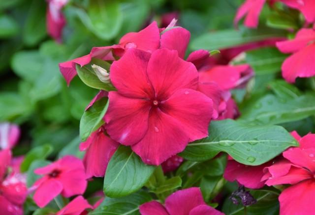f:id:flowerTDR:20210907091751j:image