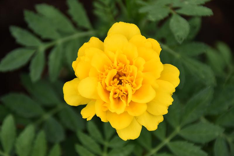 f:id:flowerTDR:20210910082609j:plain