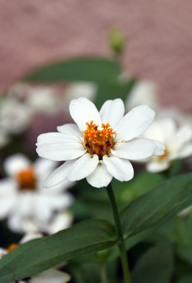 f:id:flowerTDR:20210912081147j:plain