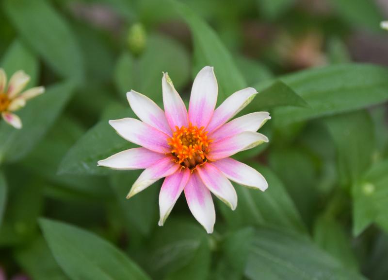 f:id:flowerTDR:20210912081158j:plain
