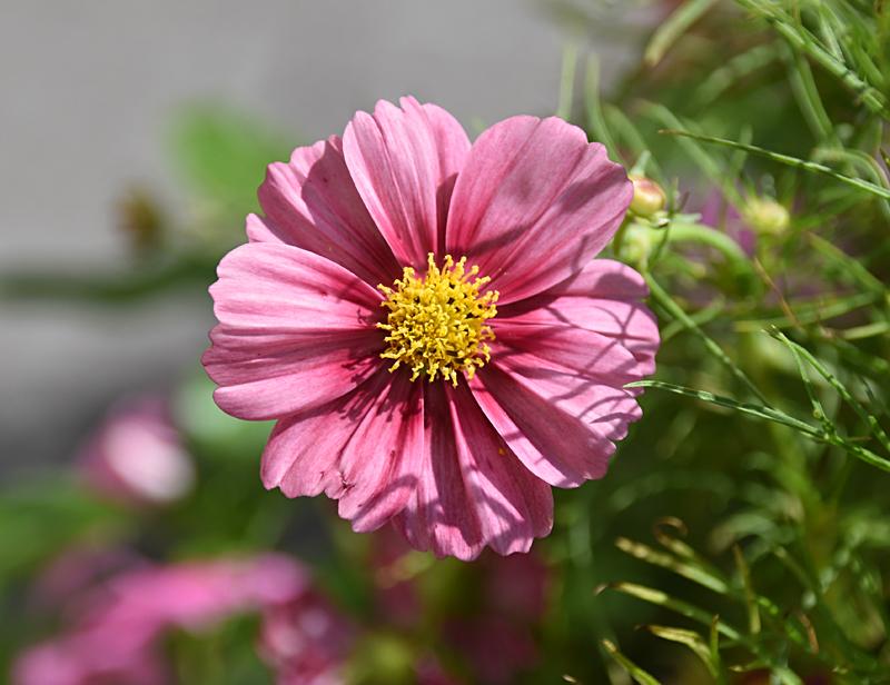 f:id:flowerTDR:20210919075407j:plain