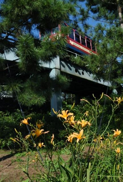 f:id:flowerTDR:20210921092341j:image