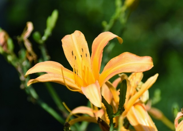 f:id:flowerTDR:20210921092403j:image