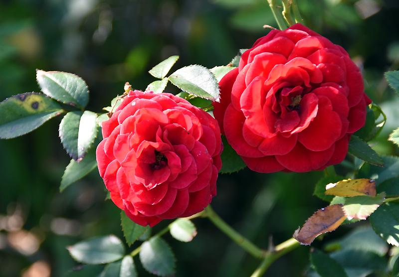f:id:flowerTDR:20210927080601j:plain